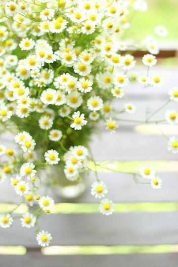 ハーブのいい香りで癒される♡清楚で可愛いカモミールの花束が素敵です♡にて紹介している画像