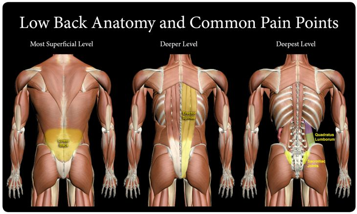 What Structures Make Up The Back What Causes Lower Back