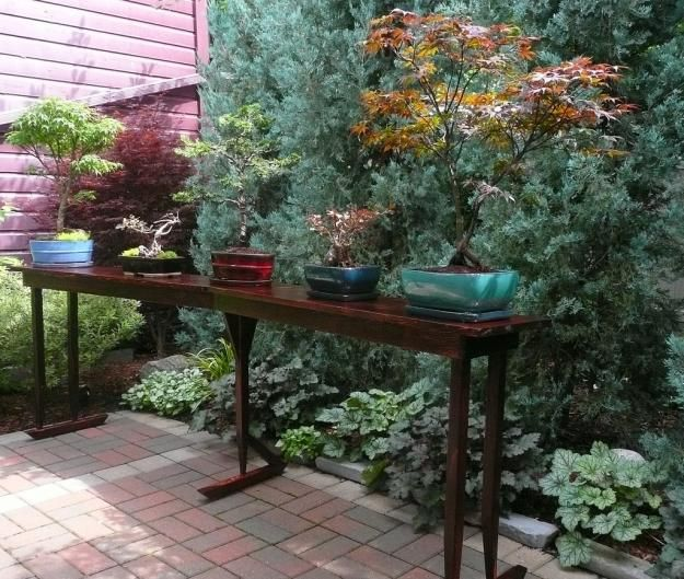 10 best images about garden bonsai on pinterest trees for Garden design with japanese maple
