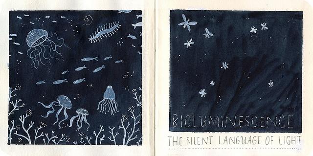 bioluminescence by ybryksenkova, via Flickr