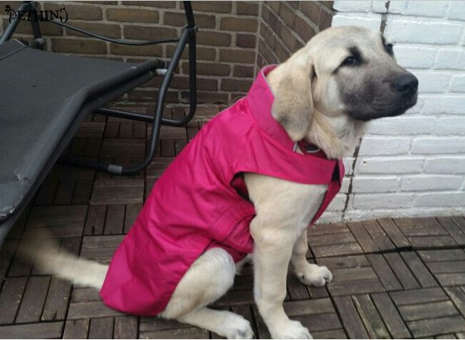 High recommend warm large dog coat fleece fabric inner big dog jacket  keep warm pet clothes XS-XXXXL fit different size dog // Worldwide FREE Shipping //     #supplies