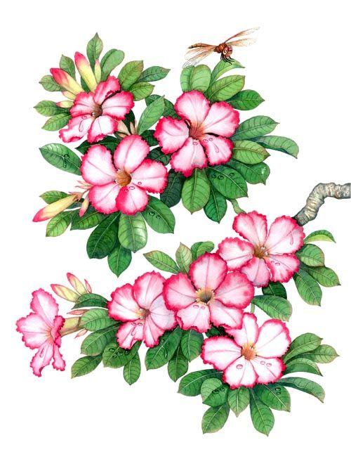 ดอกไม แห งร ก ประจำว นเก ด ว ธ การวาดดอกไม ศ ลปะดอกไม ภาพวาดดอกไม