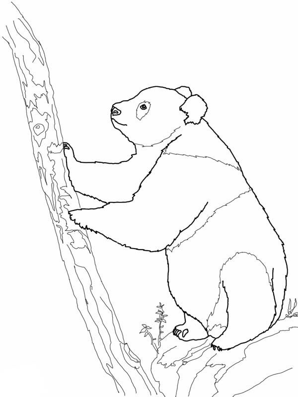 Panda Giant Panda Try To Climb Tree Coloring Page With Images