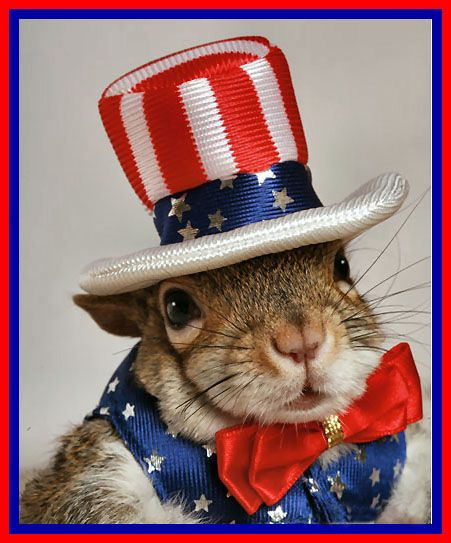 Sugar Bush Squirrel Here Please Read This Article And