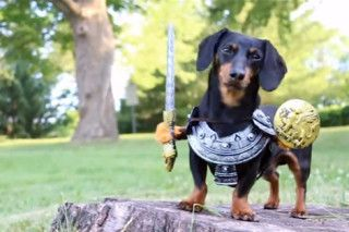 """Crusoe aparece vestido como Sandor Clegane em """"Game of Bones"""", paródia canina de """"Game of Thrones"""""""
