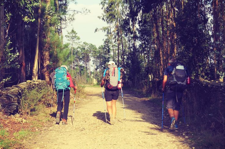 Tutto sui cammini: dati tecnici ,mappe, alloggi e informazioni su percorsi, città, clima, cibo e feste, per organizzare il tuo viaggio a piedi