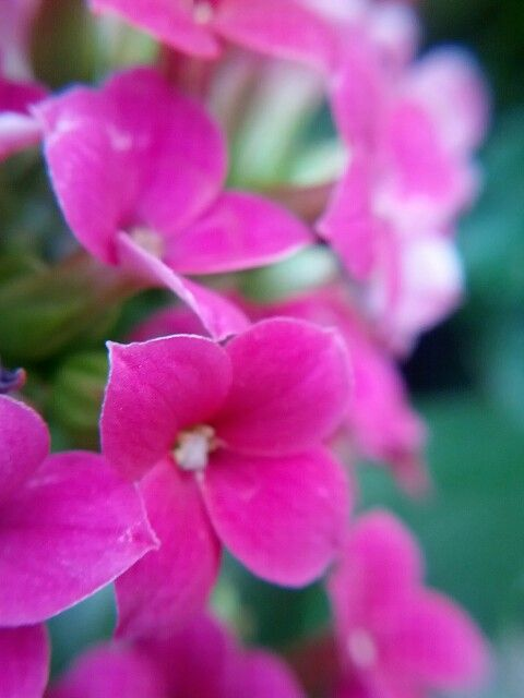 Lovely Small Pink Flowers