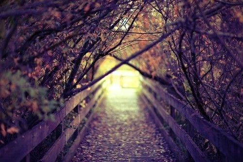 : Lights, Paths, Autumn Pictures, Autumn Leaves, Criss Crosses, Fall Autumn, Inspiration Pictures, The Bridges, Inspiration Quotes