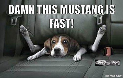 Memes - Mustang Humor