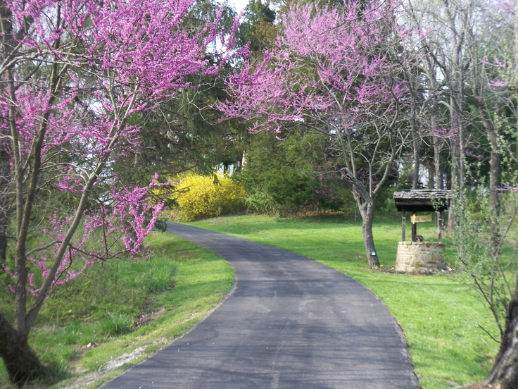 View up the drive in Spring The Oaks Cabin  a vacation rental in Brown64 best brown county images on Pinterest   Brown county  Indiana  . Rental Cabins In Brown County Indiana. Home Design Ideas