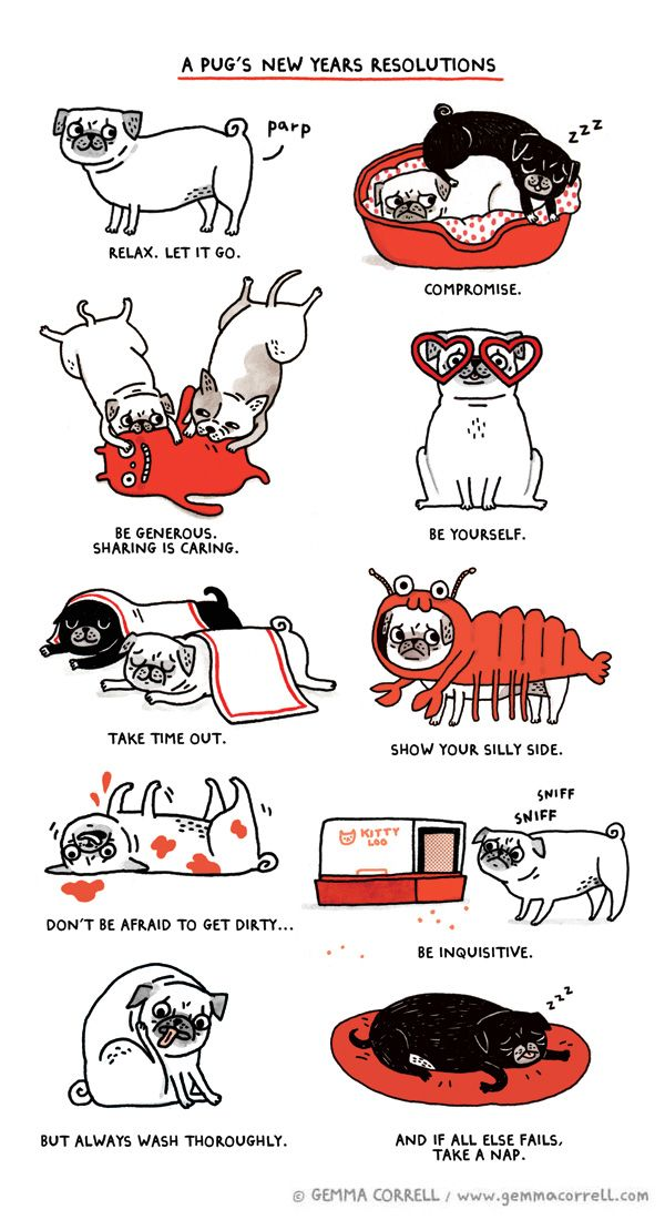 Gemma Correll's Drawings of Things. pugs. new year's resolutions. animal humor.