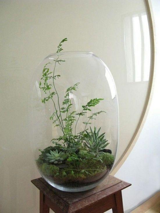 Grand bocal en verre avec des plantes grasses