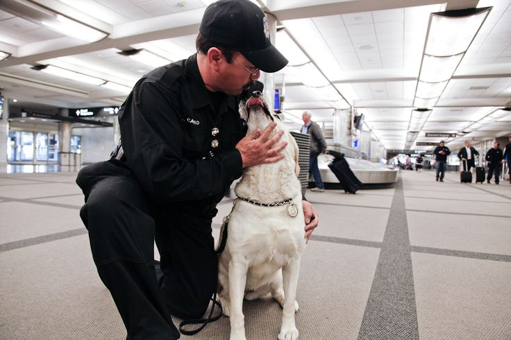 One of the Denver Police Department dogs & his handler who work to keep Denver International Airport travelers safe.