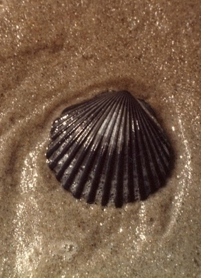 how to draw a choclate coils conch shell