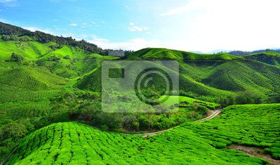 Choose a wall mural  tea, plantation, green - tea plantation fields on mountain. PIXERS wall murals made of great fabrics. Choose artistic photos from our catalog.
