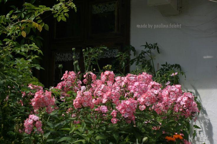 In garden...