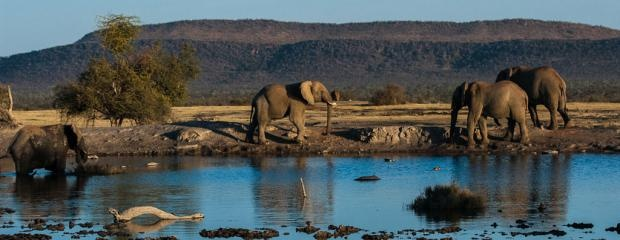 Photographic safari | Elephants at sunset | Roger Lee