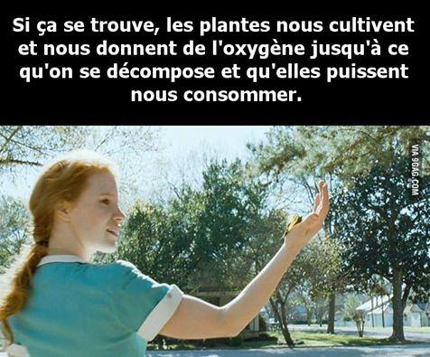 Les plantes !