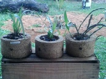 Google+ (vaso orquídea furado)
