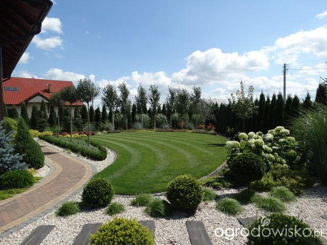 Na zielonej... trawce :) - strona 24 - Forum ogrodnicze - Ogrodowisko