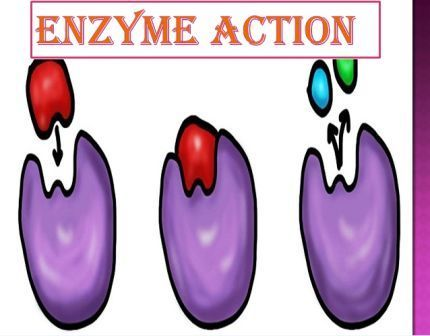 Each enzyme has an active site to which substrate binds and forms a short lived highly reactive enzyme substrate complex.