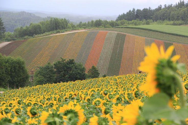 Giappone • Hokkaido Prefecture Furano, photo by cjlin