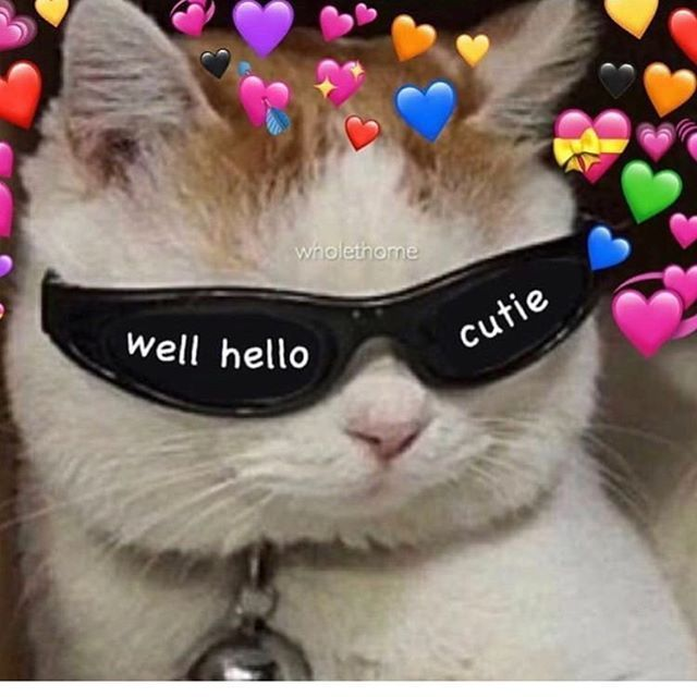 #wholesome #meme #cat #sunglasses #love #cute - #cat #CUTE ...