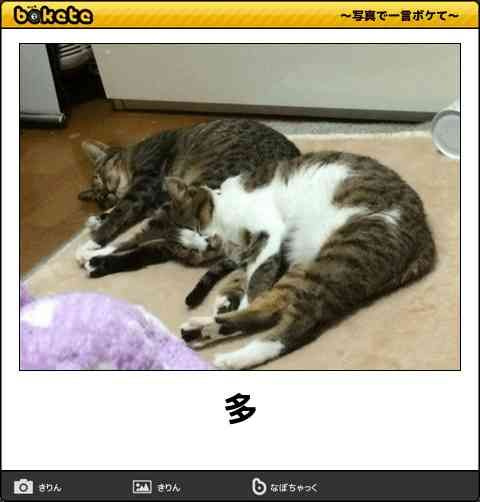 【かわいいボケてをご覧ください】 【猫ボケて特集】おもしろネコだけの笑える「bokete」画像50選 – ページ 5 – ペットライフ