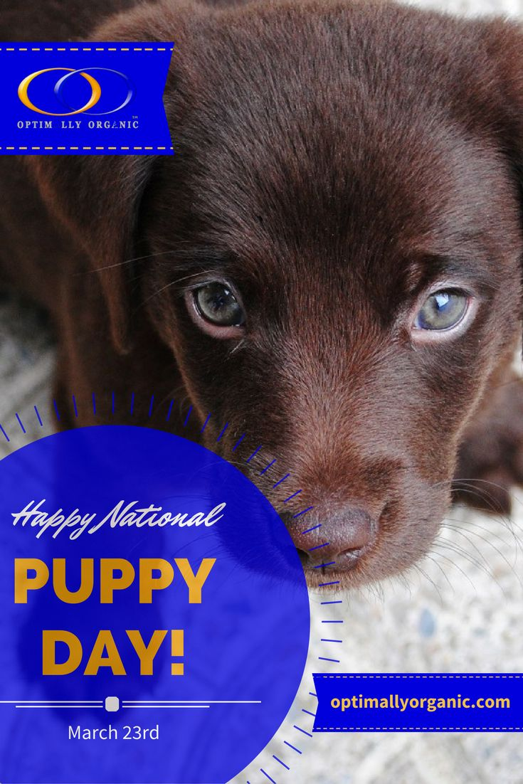 Don't forget to shower your furry little ones with kisses, hugs, treats and a fun day out! Happy National Puppy Day!