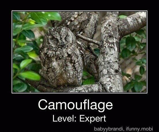 Level: Expert