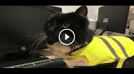 Area riservata - CaosVideo.it #Felix #cats #animals