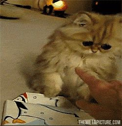 What do you mean this gift is not for me? But...Who else would it be for? (GIF)