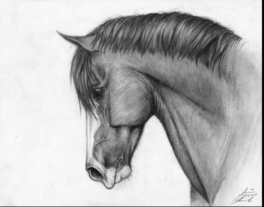 Drawing ideas - horse More