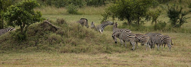 Kruger National Park