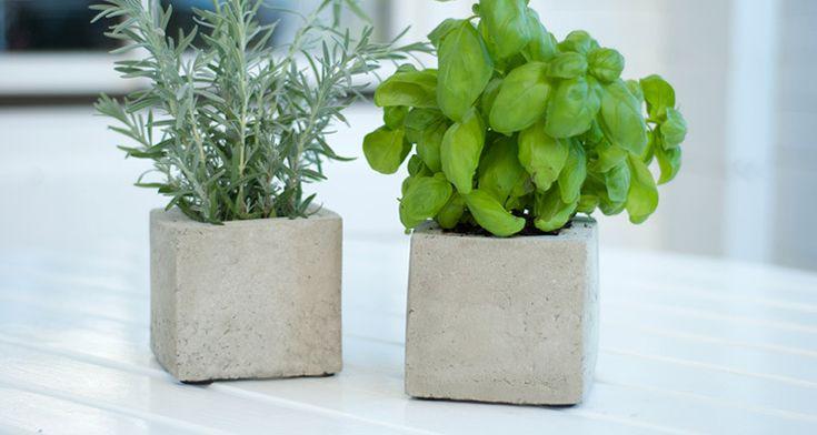"""Mit Beton lassen sich coole Pflanzen-Cubes für Küchenkräuter oder Zierpflanzen einfach selber machen. Die Anleitung gibt's im DEPOT Blog """"Schön bei Dir""""."""