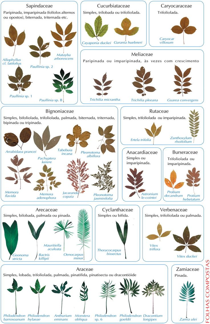 Plant Database: Plant Identification By Leaf Chart