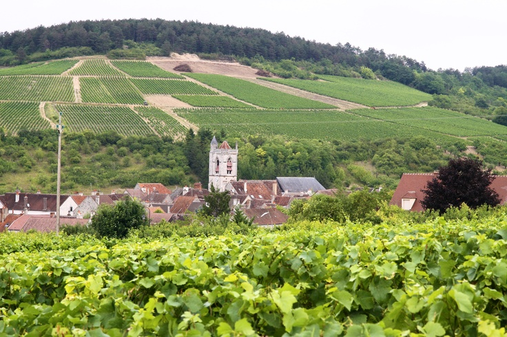 #Irancy nearby #Auxerre #Yonne #Bourgogne #Frenchvineyards