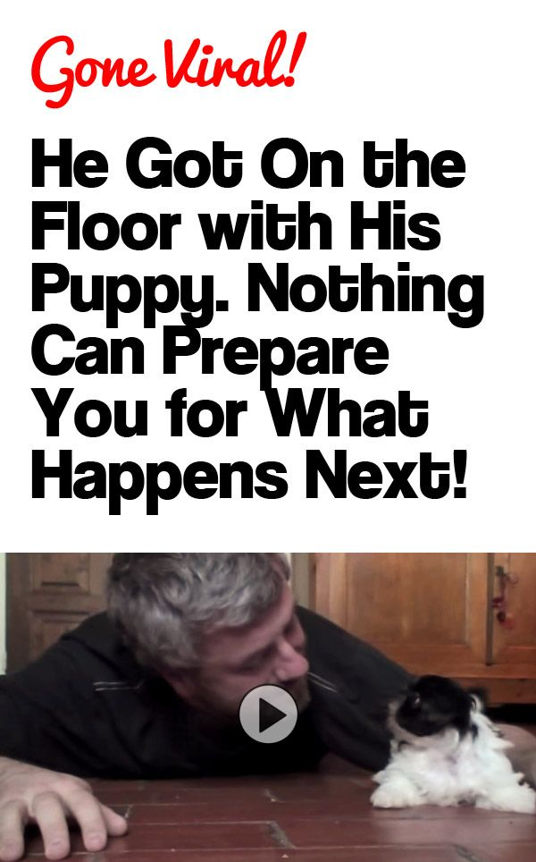 THIS IS THE CUTEST THING EVER!!! http://theilovedogssite.com/he-got-down-on-the-floor-with-his-puppy-nothing-can-prepare-you-for-what-happens-next/