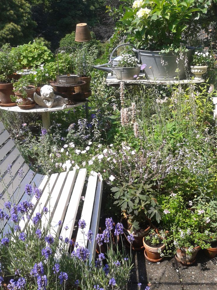 Garden seat surrounded by plants...