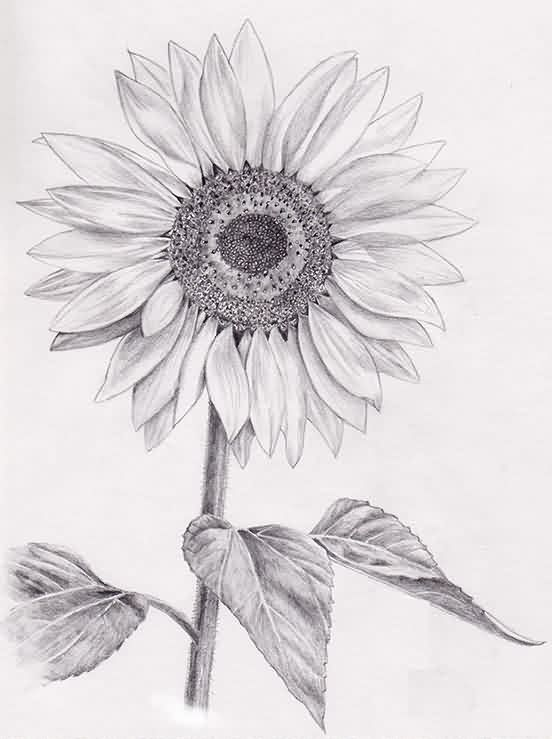 http://www.tattoobite.com/wp-content/uploads/2014/09/sunflower-tattoo-drawing.jpg