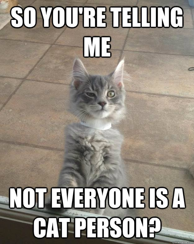 How To Be A Cat Person While Actually Hating Cats Funny Cat Memes Funny Animals Funny Cats