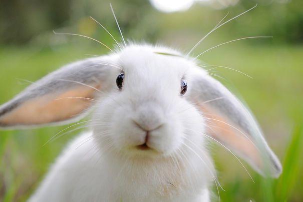 Os 25 fotos de coelhos mais fofos do mundo