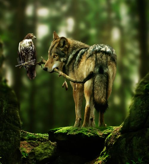 How cool is this! Reminds me of the 2 characters, the Hawk the Wolf, in the 1985 movie Lady Hawk