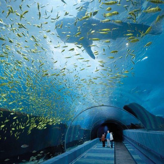 Georgia Aquarium in Atlanta, Tips for Planning Your Visit Georgia Aquarium Worlds largest aquarium for my daughter.