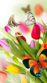 Motyle wśród kolorowych tulipanów