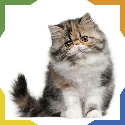 Ms de 25 ideas increbles sobre Gato perezoso en Pinterest