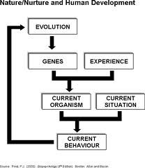 nature and nurture human development in twin studies Colloquial term for the two views of human development, one emphasizing heredity and the other environment the nature-nurture controversy is an age-old dispute among.