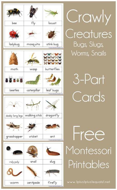 Free Montessori Nomenclature Printables ~ Crawly Creatures {Minibeasts}