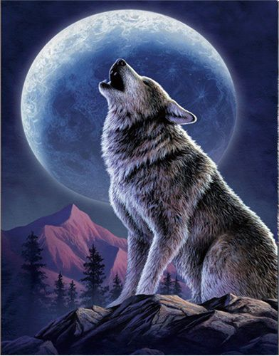 Details About Wolf Howling Lenticular 3d Picture Animal
