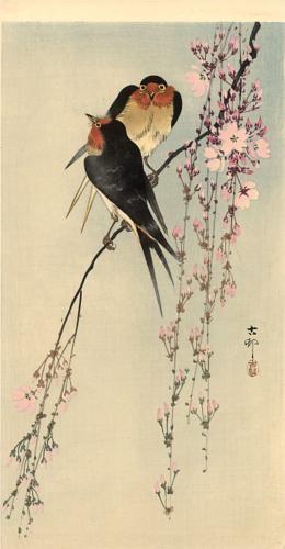 Two barn swallows on blossoming cherry by OHARA Koson (1877-1945), Japan 小原 古邨